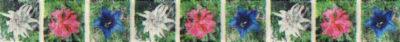 Folgende 3 Alpenblumen sind immer wieder abwechselnd zu sehen: Edelweiß, Alpenröslein und Enzian.