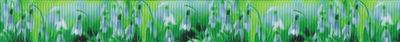 Wie fotografiert: Schneeglöckchen auf verschwommen grünlichem Ripsbanduntergrund.