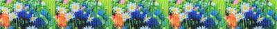 Fotodruck auf Ripsband: Bunte Blumenwiese in 5 gleichen Abbildung.