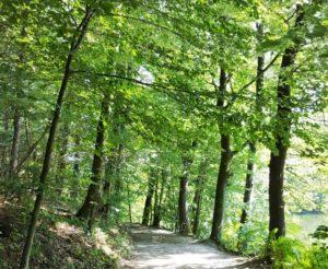 Bequem zu gehender, flacher und breiter Waldweg am Ufer der Heilenbecker Talsperre entlang.