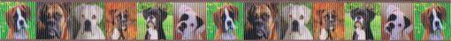 Ripsbandmotiv: 6 verschiedene Hundeköpfe mit Blick nach vorne.