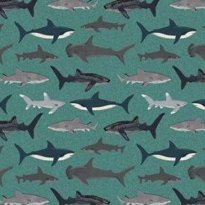 andrea lauren sharks 5284169